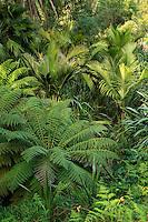 Le Domaine du Rayol:<br /> le jardin de nouvelle-Z&eacute;lande avec