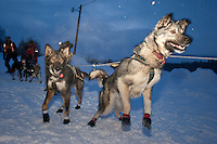 Aliy Zirkle's dogs are eager to leave Takotna after their 24 hour layover during Iditarod 2009