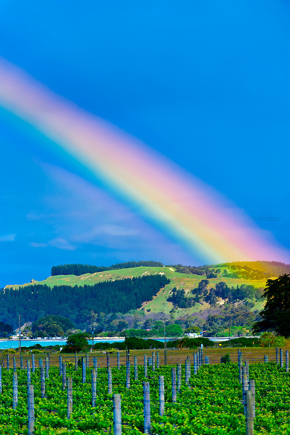A rainbow in the sky above the vineyards at the Elephant Hill Estate and Winery on the Te Awanga coast, near Napier, Hawke's Bay, North Island, New Zealand.