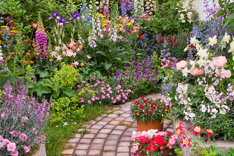 Tiered Garden path with raised bed borders of fragrant Dianthus, Digitalis foxglove vertical tall plants, Aquilegia columbines, Paeonia, containers of Antirrhinum, Alyssum, house window, Iris, evergreens, Alchemilla, hosta, pots, mixed plantings, gorgeous colorful small garden of annuals and perennial plants together