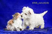 Xavier, ANIMALS, REALISTISCHE TIERE, ANIMALES REALISTICOS, cats, photos+++++,SPCHCATS816B,#A#