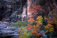 Autumn has arrived at Echo Canyon at Zion National Park, Utah