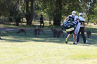 Chase Koepka (USA) walking past the Kangaroo's on the 9th during Round 1 of the ISPS Handa World Super 6 Perth at Lake Karrinyup Country Club on the Thursday 8th February 2018.<br /> Picture:  Thos Caffrey / www.golffile.ie<br /> <br /> All photo usage must carry mandatory copyright credit (&copy; Golffile | Thos Caffrey)