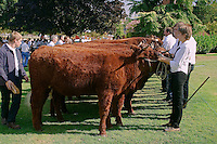 Le Festival de l'élevage et du veau de lait élevé sous la mère.<br /> Presentation des bovins dans le parc de la Guierle, centre-ville.