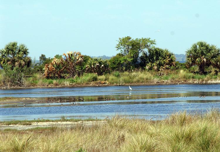 marsh at St. Marks Wildlife Refuge