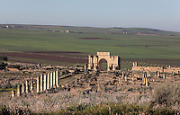 View of Volubilis, on a fertile plain in Northern Morocco, with the Decumanus Maximus or Main Street, with the Ionic columns of the Forum or marketplace and the Triumphal Arch of Caracalla, built 217 AD by the city's governor Marcus Aurelius Sebastenus in honour of Emperor Caracalla, 188-217 AD, and his mother Julia Domna. Volubilis was founded in the 3rd century BC by the Phoenicians and was a Roman settlement from the 1st century AD. Volubilis was a thriving Roman olive growing town until 280 AD and was settled until the 11th century. The buildings were largely destroyed by an earthquake in the 18th century and have since been excavated and partly restored. Volubilis was listed as a UNESCO World Heritage Site in 1997. Picture by Manuel Cohen
