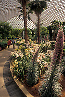 AJ3444, Longwood Gardens, conservatory, Kennett Square, Pennsylvania, Brandywine River Valley, Garden in the East Conservatory at Longwood Gardens in Kennett Square in Brandywine Valley in the state of Pennsylvania.