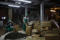 India – West Bengal: Workers processing tea at the factory at Makaibari Tea Estates, in the Darjeeling region. Here, leaves are fermented, dried and packed. Although Darjeeling tea is one of the most expensive in the world, the tea workers' living conditions here are only marginally better than in Terai and Dooars.