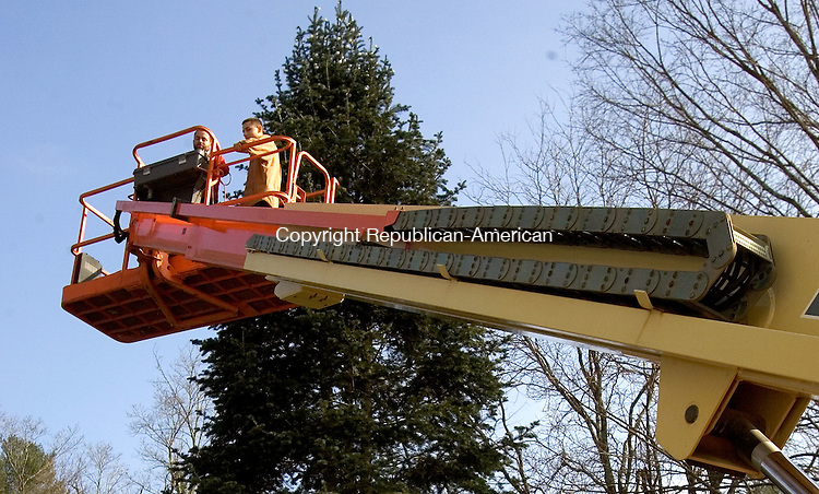 WASHINGTON, CT. 10 November 2012-111012SV02-From left, Ben Atchison and Adam Janis of Eagle Electric ride a platform to the top of the tree to drape lights on a Christmas tree planted in May to replace one chopped down by vandals in Washington Saturday..Steven Valenti Republican-American
