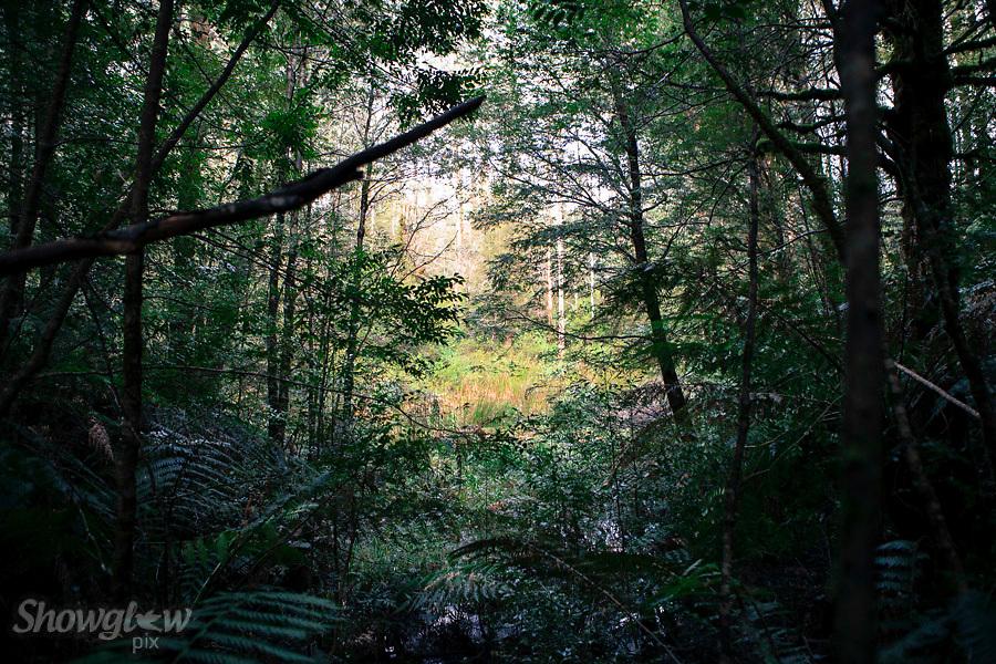 Image Ref: T64<br /> Location: Ada Tree Walk, Yarra Ranges<br /> Date: 16 July, 2016
