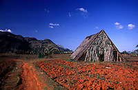 A tobacco Barn amidst red-clay agricultural fields. Tobacco Barn. Pinar del Rio Cuba Vinales Vally.