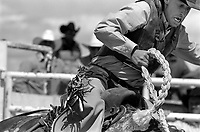 A saddle bronc rider flies out of the chutes at the Earl Anderson Memorial Rodeo in Grover, Colo.