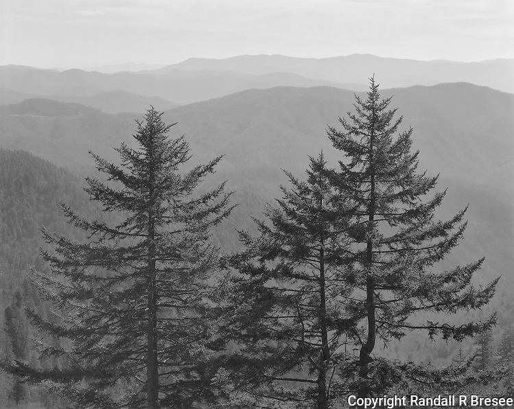 &quot;Family Of Trees&quot; Great Smoky Mountains National Park, North Carolina<br />