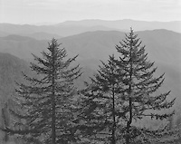 &quot;Family Of Trees&quot; Great Smoky Mountains National Park, North Carolina<br /> <br /> This image makes me imagine a &quot;family&quot; of trees that includes a &quot;father,&quot; &quot;mother&quot; and &quot;child.&quot; The photo was taken from a pullout at high elevation on Clingmans Dome Road. The day was quite hazy and a medium yellow filter was used to reduce atmospheric haze somewhat but leave enough haze to contribute to the sense of depth in this black and white photograph.