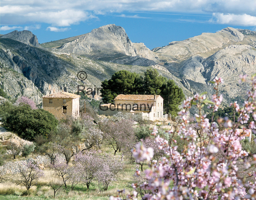 Spain, Costa Blanca, near Benidorm, El Castell de Guadalest: small village upcountry, Almond Blossom | Spanien, Costa Blanca, bei Benidorm, El Castell de Guadalest: kleiner Ort im Landesinneren, Mandelbluete