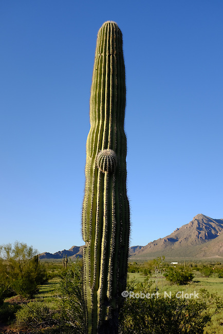 Picacho Peak State Park and campground in Arizona
