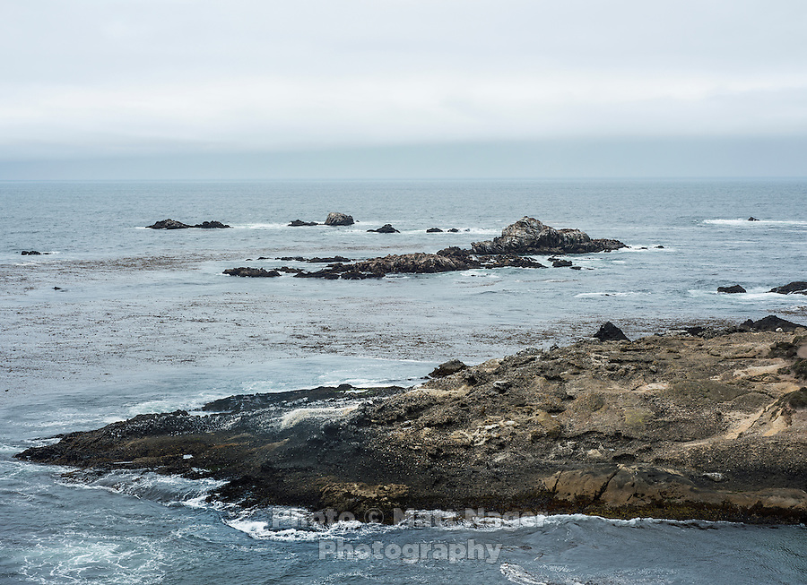 Point Lobos State Reserve in California, August 2013. <br /> <br /> Photo by Matt Nager