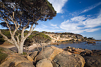 Bunker Bay, near Dunsborough.  Geographe Bay, Western Australia, AUSTRALIA.