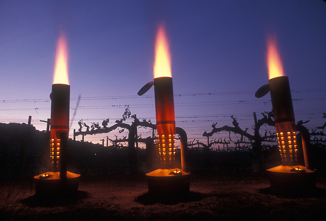 Vineyard heaters used during springtime frost to prevent damage to new buds