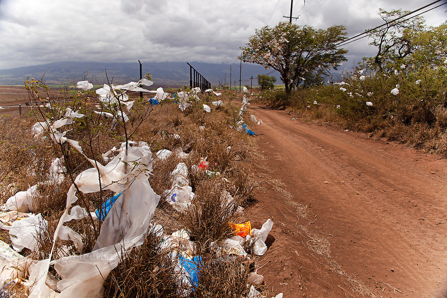 Scrubs and trees filled with plastic bags, down wind from a landfill site on the island of Maui, Hawaii.  A state wide ban on plastic bags went into effect in January 2011.