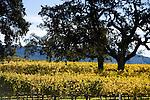 Sonoma Stock Images