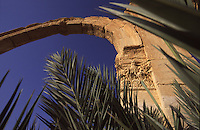 SIRIA - sito di Palmira(Tadmor) , arco e palme -Guglielminotti 9/2003
