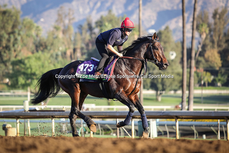 October 28, 2014: Trade Storm (GB) exercises in preparation for the Breeders' Cup Mile at Santa Anita Park in Arcadia, California on October 28, 2014. Zoe Metz/ESW/CSM