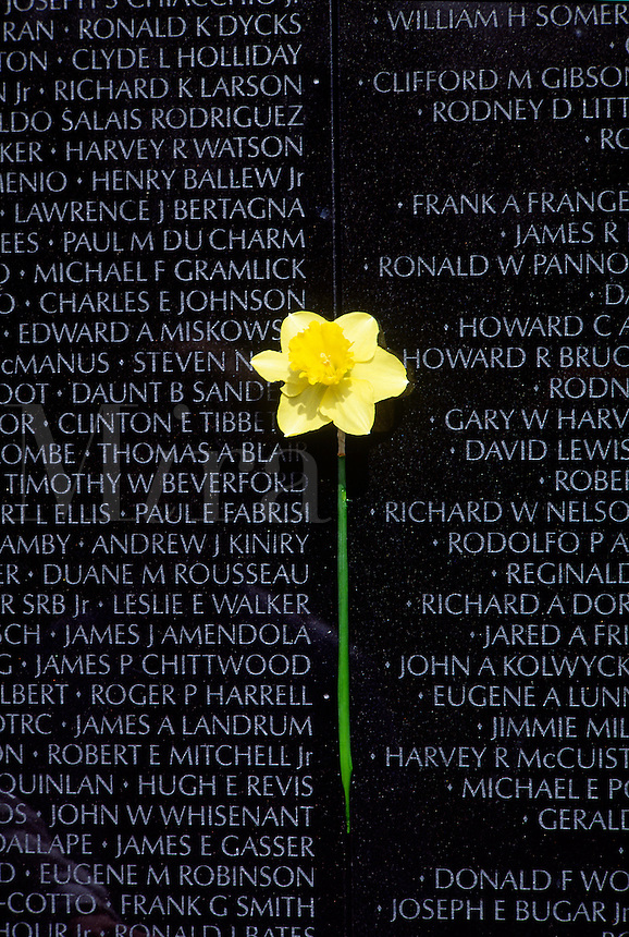 Vietnam Veterans War Memorial, daffodil against list of names #5413. Washington DC.