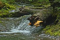 Money Brook Trail