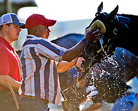 BALTIMORE, MD - MAY 17:  Classic Empire gets a bath after exercising in preparation for the Preakness Stakes this Saturday at Pimlico Race Course on May 17, 2017 in Baltimore, Maryland.(Photo by Scott Serio/Eclipse Sportswire/Getty Images)