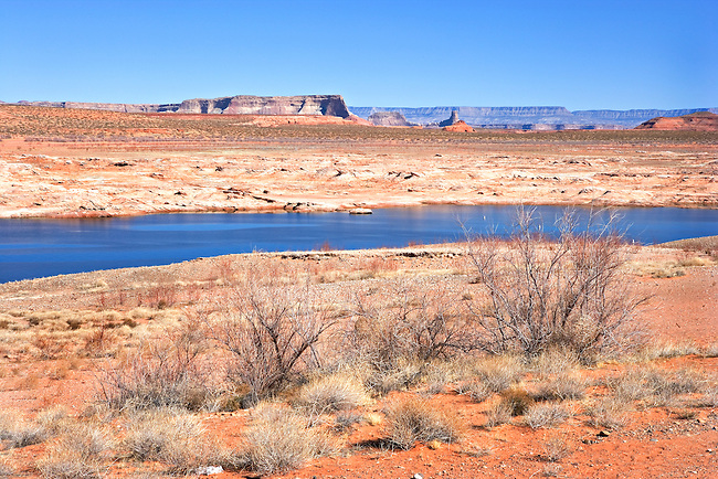 Desert Vegetation Along Shores of Lake Powell and Colorado Plateau Distant Mesas, Utah