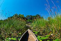 Mokoro (canoe), near Kwara Camp, Okavango Delta, Botswana.
