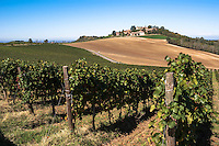 Campi presso Oliva Gessi, paese in provincia di Pavia --- Fields at Oliva Gessi, small village in the province of Pavia