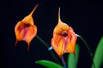 2018_09_02 Orchids