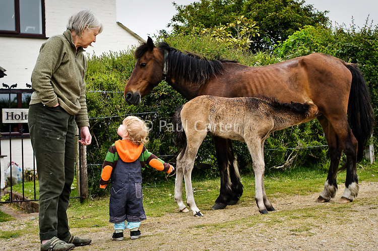 Grandmother with her grandson watching a New Forest pony feed her foal