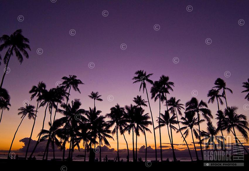 Tall palm trees at sunset, San Souci beach, also known as Kaimana beach, near Kapiolani park, Waikiki