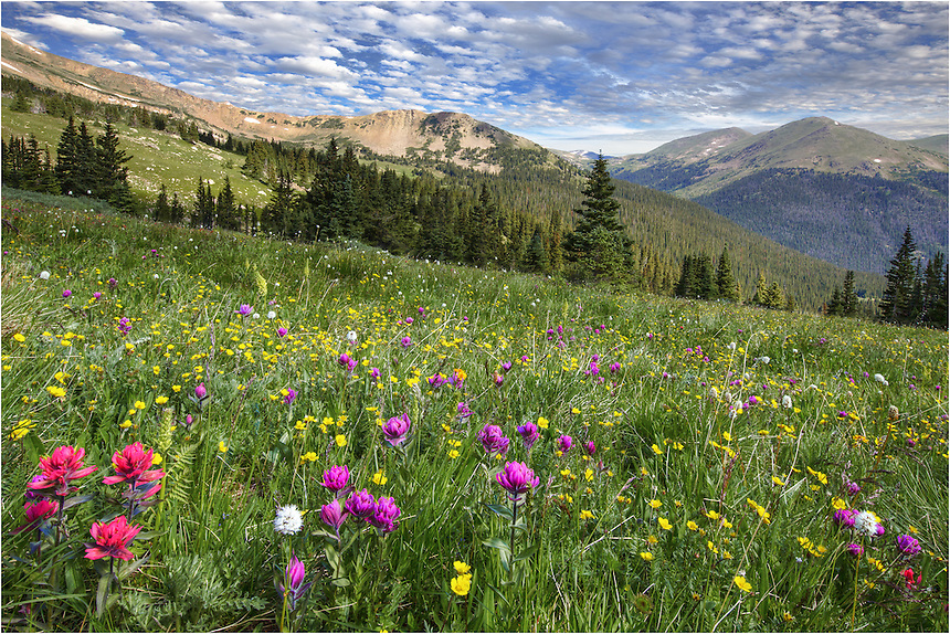 In the summer months, if you are willing to hike ~ 2.5 miles up Butler Gulch, your reward may be a field of Colorado Wildflowers. After the snows melt, an explosion of colorful blooms grace the mountain sides and slopes of Vasquez Ridge. If you want to find a location to capture Colorado Wildflower pictures and you are near Denver, this may be an option. The Butler Gulch Trailhead is located on Highway 40 near the town of Empire.