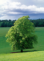 Tree in field of green
