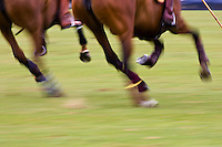 Ponies at Guards Polo Club in Windsor, United Kingdom
