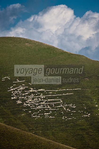 Europe/France/Aquitaine/64/Pyrénées-Atlantiques/Pays-Basque/Larrau: Moutons en estive au Port de Larrau,