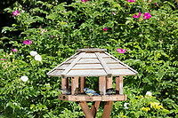 Ganzjahresfütterung, Vogelfütterung im Sommer