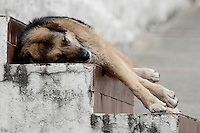 BOGOTÁ -COLOMBIA. 19-02-2017: Perro criollo tomando una siesta en el centro de Bogotá, Colombia. / A dog is seen taking a rest in the down town of Bogota, Colombia. Photo: VizzorImage/ Gabriel Aponte / Staff
