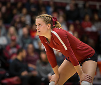 Stanford, CA - October 18, 2019: Meghan McClure at Maples Pavilion. The No. 2 Stanford Cardinal swept the Colorado Buffaloes 3-0.