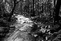 Creek , Yosemite  35mm on film