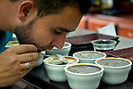 Professional coffee taster sniffs a sample of brewed coffee checking the aroma.  Various blends of coffee are compared for taste and flavor at a coffee cooperative.
