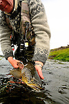 Handheld brown trout- Iceland 2013