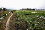Countryside near Quy Nhon, Vietnam. April 25, 2016.
