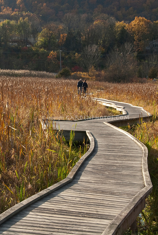 Twists & turns of life showing Boardwalk thru Cattail Meadow for hiking in fall with couple in distance, lovely golden light, life's path and journey