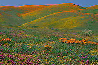 Goldfields, purple owl's-clover<br />