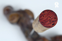 Red Wine cork on corkscrew, studio (Licence this image exclusively with Getty: http://www.gettyimages.com/detail/82406677 )
